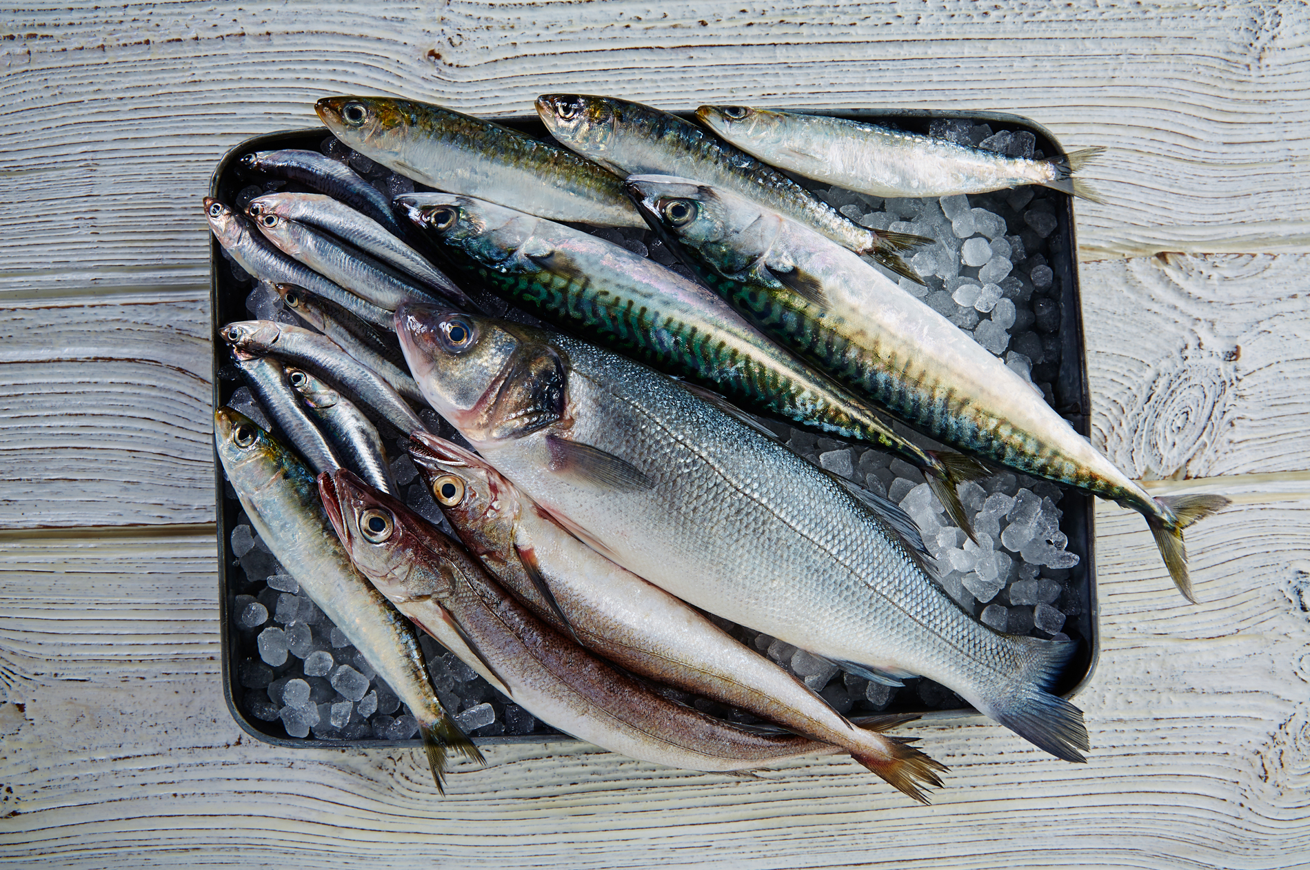 weltmeer nachhaltiger fischfang